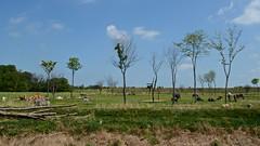 Heart of Africa (tim.perdue) Tags: africa trees columbus ohio summer animal zoo heart powell savannah grassland 2014