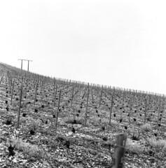 Arsonval (Patrick Pron) Tags: bw film zeiss mediumformat vineyard champagne delta hasselblad carl 100 28 vignoble ilford cf planar 80mm 500cm moyenformat arsonval