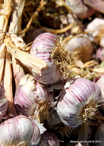 Garlic Bulbs 2