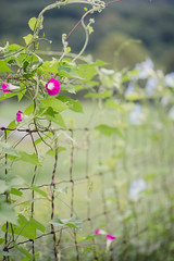 Grow (kaylynne182) Tags: flowers west color nature fence photography virginia nikon wv bloom d600