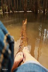 (33 Photography) Tags: wood light shadow lake forest dead surface  barefoot lightandshadow tadpole nantou          lakesurface nantouhsien