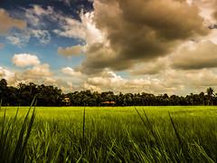 DSCN7189 (stephan jo varghese) Tags: sky india grass landscape nikon scenery kerala