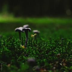 (kmgfoto) Tags: food nature forest fun mushrooms austria nikon poland foodies pilze wald freelance d7000