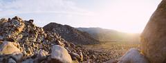 Joshua Tree (Ryan DeYoung) Tags: panorama tree nikon joshua pano joshuatree 28 1755 d7000