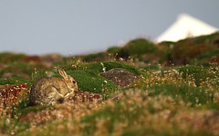 wash 'n brush up near the cottage (Sue Wolfe) Tags: nature birds wales westwales wildlife birding cymru september pembrokeshire aurumn skokholm skokholmisland autumnmigration welshwildlifebreaks pembrokeshireislands