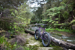 Manutewhau Stream (ibikenz) Tags: bike bicycle forest log bush stream singlespeed pugsley mountainbiking surly fatbike rx100 moirepark sonycybershotdscrx100 manutewhau