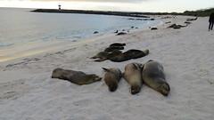 Galapagos - San Cristobal-34