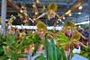 DSC_3971 (nporeginald) Tags: nikon d600 nikkor afs 2470 2470mm f28 g ed taiwan tainan 台灣 台南 府城 南瀛 蘭花 蘭展 台灣國際蘭展 蘭花展