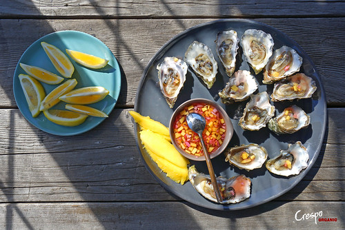 "Oysters and Mango Mignonette • <a style=""font-size:0.8em;"" href=""http://www.flickr.com/photos/139081453@N03/32458715763/"" target=""_blank"">View on Flickr</a>"