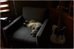 Jackson, March 14, 2017 (Maggie Osterberg) Tags: leica m9p zeisscbiogon3528 maggieo lincoln nebraska cat jackson colorefexpro4