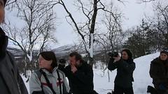 Il lupo artico (Nicola Armari) Tags: lupo norvegia norway artico