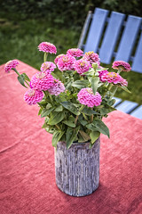 Bouquet of zinnias in a vase (typographics2010) Tags: zinnia elegans flower vase old cup background nature flora bloom ornamental vintage pink red decorative floral green stem rustic petals arrangement arranged garden wooden gardening pot color summer plant chair home table flowers small decoration furniture interior country