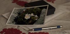 To Mum (Tunde Tenkei) Tags: present gift surprise postcard post letter mail tomum biro pen birthday nikon d200 stilllife photodiary