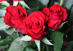 DSC_4719 (PeaTJay) Tags: nikond750 reading lowerearley berkshire macro micro closeups gardens indoors nature flora fauna plants flowers bouquet rose roses rosebuds