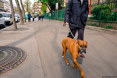 fuji x70 fujifilm paris dog streetphotography street