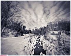 Toward the snowy field (DelioTO) Tags: 4x5 adoxchs100 blackwhite d23 desaturated february landscape natparks ontario pinhole rural trails winter woods