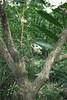 動物園_356 (Taiwan's Riccardo) Tags: 2014 taiwan digital color dslr nikond600 nikonlens afs nikkor zoom 18200mmf3556 vr 台北市 木柵 動物園 熊貓 panda 團團