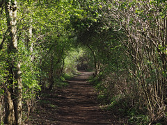 potteric carr pathway (Johnson Cameraface) Tags: 2017 march spring olympus omde1 em1 micro43 zd zuiko macro 50mm f2 johnsoncameraface pottericcarr pottericcarrnaturereserve doncaster yorkshirewildlifetrust ywt yorkshire southyorkshire nature
