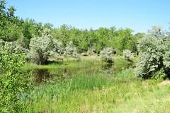 Wetland (Patricia Henschen) Tags: canoncitycolorado arkansasriver riverwalk usroute50