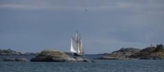 Ankarudden, Tor (sorundalasse) Tags: sea archipelago sailingship hav segelbt nynshamn skrgrd tor klippor ankarudden