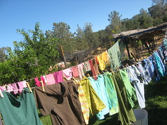 (Willowpoppy) Tags: summer color colour june weekend saturday line clothes laundry washing 2014