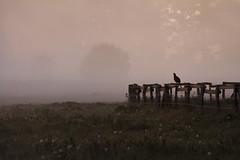 Shadowland... (akal_flickr) Tags: morning light fog shadows innamoramento
