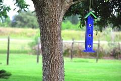 Blue Bird House (West Beach Sunset) Tags: blue tree canon eos backyard dof artistic digitalart birdhouse sunnyday vividcolors cr2 outdoorphotography eos60d