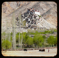 Returning To Ladakh Time And Again (designldg) Tags: travel india heritage architecture river square landscape photography freedom asia peace view buddhist faith dream culture atmosphere unescoworldheritagesite soul devotion imagination tibetan spiritual shanti dharma sindh oldcity timeless ladakh quietness tibetanplateau jammuandkashmir colddesert indiasong drugpa panasonicdmcfz18 chemreygompa chemdemonastery himalayanhills laurentgoldstein
