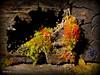 The garden of moss:) (Yolanta Z) Tags: stagathe