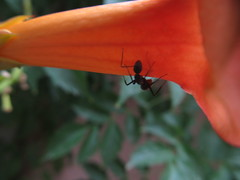 Summertime Photography(With my Canon Powershot SX 130) (abhinavtiwari2) Tags: flowers nature canon photography ants colorandcolors canonpowershotsx130