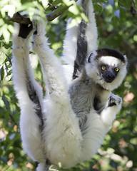 20140606__berenty_forest_walk_0117 (Bill Popik) Tags: