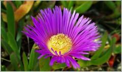 Flower (tor-falke) Tags: flower nature flora sony natur blumen blume sonyalpha alpha200 torfalke flickrtorfalke alpha200230