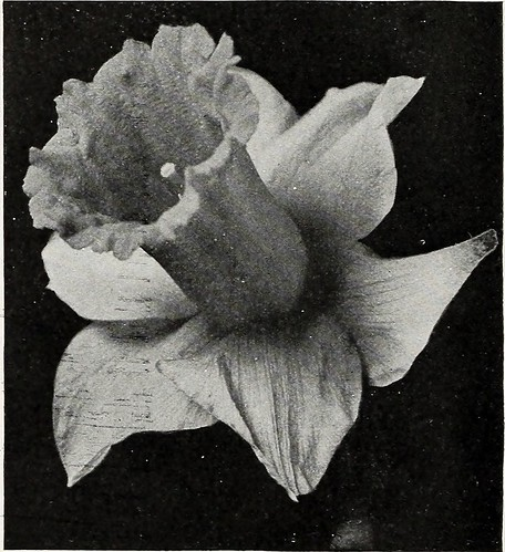 "Image from page 13 of ""Beckert's bulb catalogue : fall 1916"" (1916)"