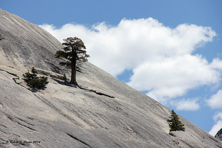 Trees On A Rocky Dome