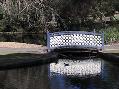 Botanical Gardens (dlerps) Tags: park wood bridge trees reflection nature water swimming duck woods sydney sigma australia botanicalgardens lerps sonyalphadslr sigma1850mmf28exdcmacro daniellerps