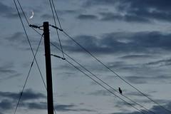 The telephone pole (~Bella189) Tags: herowinner