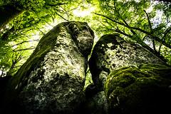 Giants (luigig75) Tags: wood trees canon rocks monte viterbo beech 1022 soriano cimino faggi 70d efs1022mmf3545usm faggeta