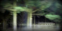Through the trees (Snorkle-suz) Tags: tree photofrommovingcar movement blur newzealand nz aotearoa green trees outside outdoor nikoncoolpixl120 experiential experiment ordinaryart experimental shallowdepthoffield dof smileonsaturday treesinthepicture