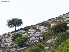 Galdames. Burdinaren bidea. The Iron Route. La ruta del Hierro.2014.09.06 (AnderTXargazkiak) Tags: ruta del la iron route the hierro bidea galdames burdinaren