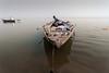 Ganga (ayashok photography) Tags: ayashok ayashokphotography nikon nikonstunninggallery nikond700 tokina1735mmvr varanasi ghatsofvaranasi ganga ganges river northindia uttarpradesh cwc chennaiweekendclickers 2013 seagull pilgrim birds group crowd pilgrimages boat ride india varday10243 indian bharath desi desh barat barath bharat asia asian tokina1735mm