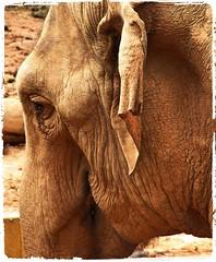 Image22 - Copia (Daniel.N.Jr) Tags: animal selvagem zoologico kodakz990
