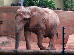 Image13 - Copia (Daniel.N.Jr) Tags: animal selvagem zoologico kodakz990