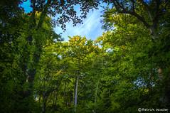 lichtung (Patrick-Wiesler) Tags: summer sun tree green animal canon germany deutschland tiere weide natur patrick freiburg pferde wald bume schwarzwald baum hdr mllheim badenweiler weilertal oberweiler wiesler niederweiler wieslerfoto
