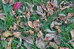 _MG_5471 (JacobBoomsma) Tags: autumn camp fall nature leaves southdakota day september ymca siouxfalls summercamp leifericson