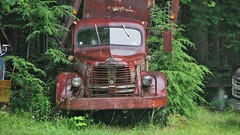 CRUSTY OLD REO TRUCK IN 2015 (richie 59) Tags: trees usa ny newyork cars wet water overgrown grass rain rural america truck outside us vines weeds rust unitedstates country rusty headlights grill vehicles faded rusted newyorkstate autos raining oldtruck automobiles nys wornout nystate reo frontend hudsonvalley motorvehicles fadedpaint ulstercounty americantruck midhudsonvalley midhudson ulstercountyny obsolet ustruck oldrustytruck 2010s townofrochester richie59 townofrochesterny riotrucks