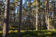 Forest (jonathan.scaife81) Tags: woods forest trees landmark adventure park carrbridge aviemore highland perthshire scotland cairngorm canon 6d tamron28300 28300mm tamron nature squirrel trail