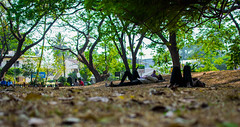 Shaded (relishedmonkey) Tags: nikon d5300 trees 35mm 18g shade nature people outdoor air oxygen freedom space leaves rest lie under life dried branches day kerala green orange