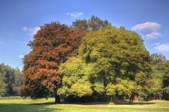 Summercolors (Hondamaik's Photography) Tags: summer summercolors colors farben trees bäume sommer heis juni juli hdrphotos hdr