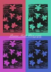 Alt Film Flowers (brianna_heather) Tags: queen square wonderland white wonderful flower flowers earth beautiful beauty green grey hue tree trees love life lovely blue posed rose grass purples darkened dark nature outdoor saturation mother photography contrast myphoto sky skyline happy blurry fun blur blues manual focus nikon pink lightened light colors zoo amazing abnormal happiness model field fields glass gold black canon slam art museum