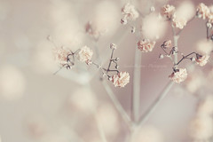 """You're just a daydream away."" (Sandra Köppen 